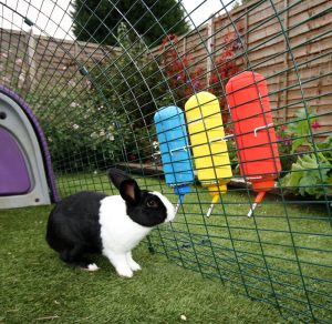 10_Critical_Facts_about_Caring_For_Netherland_Dwarf_Rabbits-Water Bottle