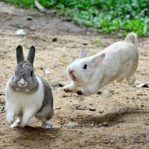 8 Cool Games to Play with Your Pet Rabbit -Run and Catch