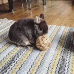8 Cool Games to Play with Your Pet Rabbit -Throw and fetch