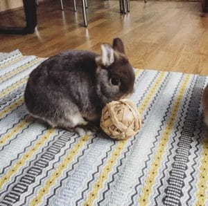 8 Cool Games to Play with Your Pet Rabbit