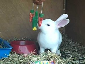 8 Cool Games to Play with Your Pet Rabbit -Treat Tease