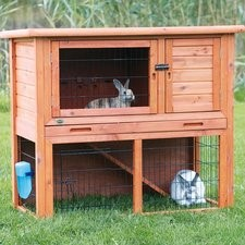 Guide to Netherlands Dwarf Rabbits Breeding Step 2