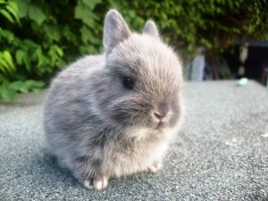 How to Help Netherland Dwarf Rabbits Adjust to a New Home