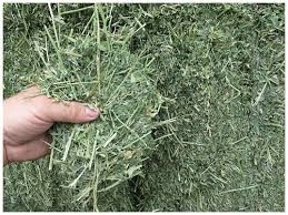The Best Daily Rabbit Diet-Alfalfa Hay