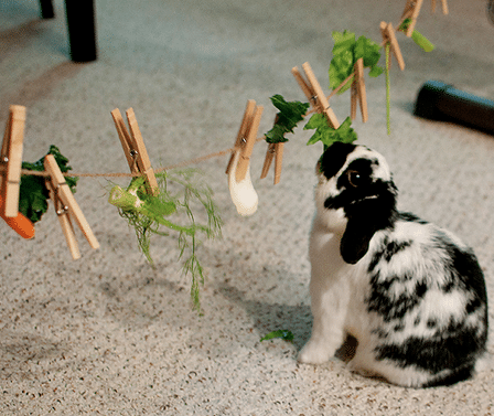 The Cheapest Homemade Toys for Rabbits