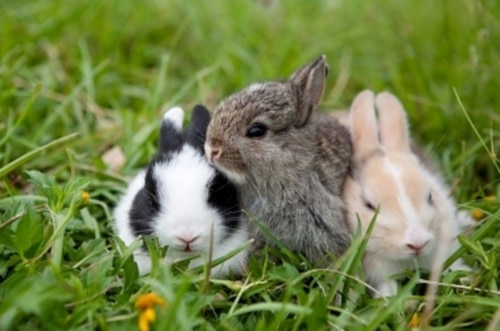 cute-bunny-rabbits-baby-bunnies-16