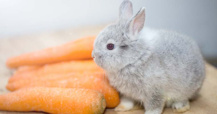 cute-bunny-rabbits-baby-bunnies-17