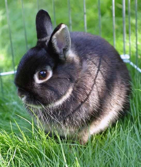 10 Critical Facts about Caring For Netherland Dwarf Rabbits