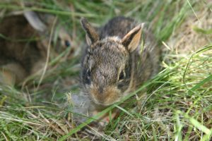 What To Do If You Find An Abandoned Bunny Baby