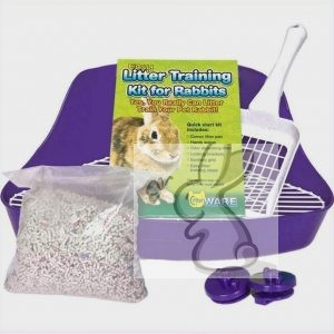 How To Litter Train Your Pet Netherland Dwarf Rabbit – Tips & Tricks