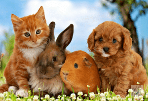 Keeping the Netherland Dwarf Rabbits with Cats and Dogs