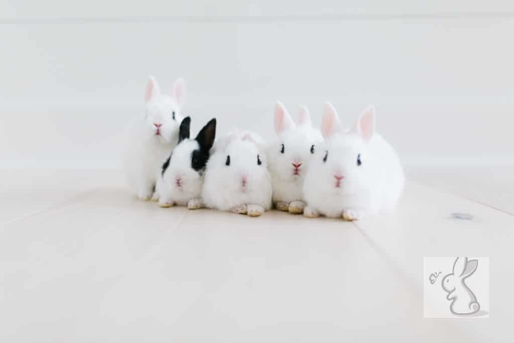 White rabbit on white floor